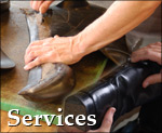 Services at Calcutt & Sons - Leatherwork Repairs | Riding Wear | Hunt Clothing